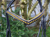 bridle with yellow rhinestones